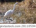 bird, birds, fowls 28110594