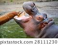 動物 河馬 哺乳動物 28111230