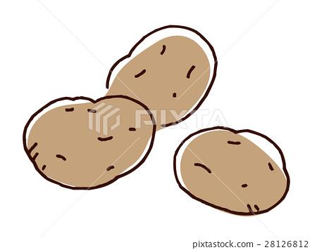 土豆 馬鈴薯 蔬菜 28126812