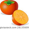 persimmon - vector illustration 28135609