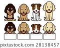 개, 강아지, 동물 28138457