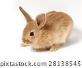 토끼 28138545