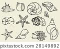 Set of vector vintage seashells 28149892