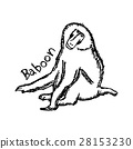 black lines of baboon 28153230