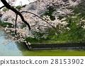 tokyo, nippon, cherry blossom 28153902