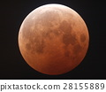 lunar, moon, lunar eclipse 28155889