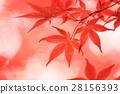秋天 秋 楓樹 28156393