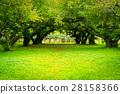 Japanese apricot  garden. Soft focus. 28158366