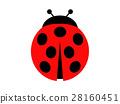 Ladybug 28160451