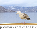 Seagull perching on a handrail of cruise ship 28161312