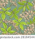 flower, elderflower, pattern 28164544