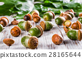oak leaves and acorns on a wooden table 28165644