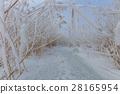 Comana lake in winter 28165954