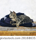 adorable cat kitty 28168635