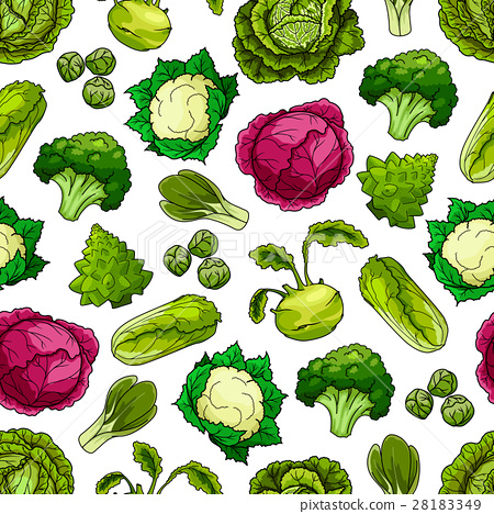 Cabbage vegetables vector seamless pattern 28183349