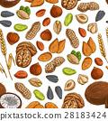 nut, bean, vector 28183424