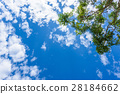 green leaves on a background of blue sky 28184662