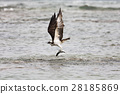 มหาสมุทร,ปลา,นก 28185869