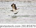 มหาสมุทร,ปลา,นก 28185870