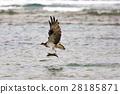 มหาสมุทร,ปลา,นก 28185871