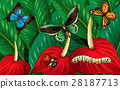 Butterflies and other insects in garden 28187713
