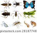 Insects set on white background 28187748