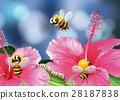 garden flower spring 28187838