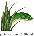 生物 热带 绿色 28187866