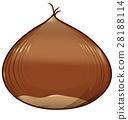 chestnut isolated on white background 28188114