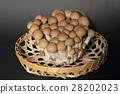 부나시메지 버섯 28202023
