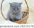 Little kitten sitting in the basket 28210178