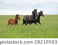 Horse 28210503