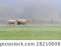 動物 農場 霧 28210608