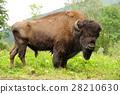 Bison 28210630