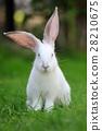 Rabbit 28210675
