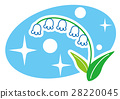 lily of the 28220045