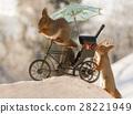 动物 松鼠 自行车 28221949