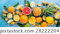 Variety of citrus fruits 28222204