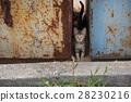 problemlittle tabby kitten with green eyes in 28230216