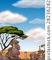 animal, meerkat, rocks 28236282