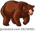 bear, brown, fur 28236981