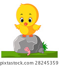 Cute chicken cartoon 28245359
