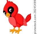 Cartoon beautiful cardinal bird 28245499