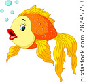 Gold fish with bubbles 28245753