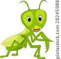 Praying mantis grasshopper cartoon 28245988
