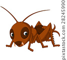 Cute cricket cartoon 28245990