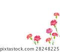 康乃馨 水彩畫 插圖 28248225