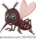 mosquito cartoon 28249258