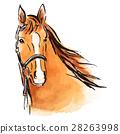 equine, horse, watercolour 28263998