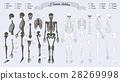 Human Skeleton. White and Black. Names of Bones 28269998